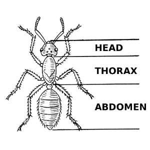 Worksheets Insect Body Parts Worksheet parts of an insect worksheet sharebrowse body sharebrowse