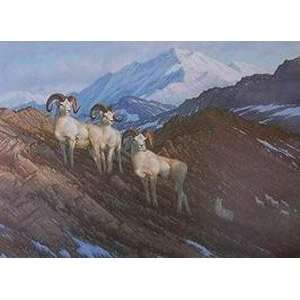 Michael Sieve   Alaskan Classic Dall Sheep: Home & Kitchen
