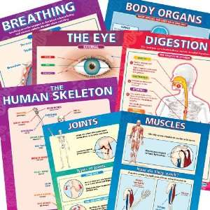 Elementary Anatomy Chart Set: Health & Personal Care