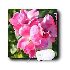 Patricia Sanders Flowers   Pretty Pink Roses Flowers