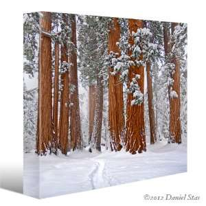 TREES Winter Snow Landscape CANVAS GICLEE ART PRINT #9902 (Small