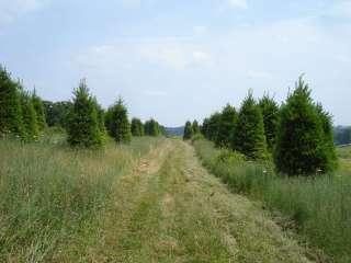 35 AcreTree Farm Land   Springs   Gun Deer Hunting   New Barn