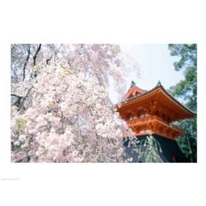 Cherry Blossom tree in front of a temple